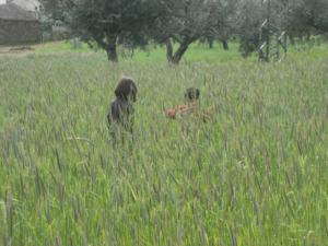 pascoa2009-3281.jpg